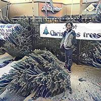 twas the night picking out christmas tree pic